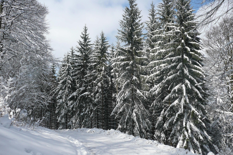 Winterlandschaft Willingen im Sauerland